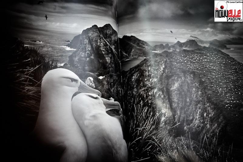 Salgado - Foto di Luca Carlino