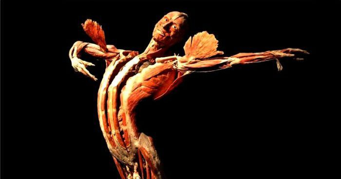 Dance Anatomy di Jacqui Greene Haas